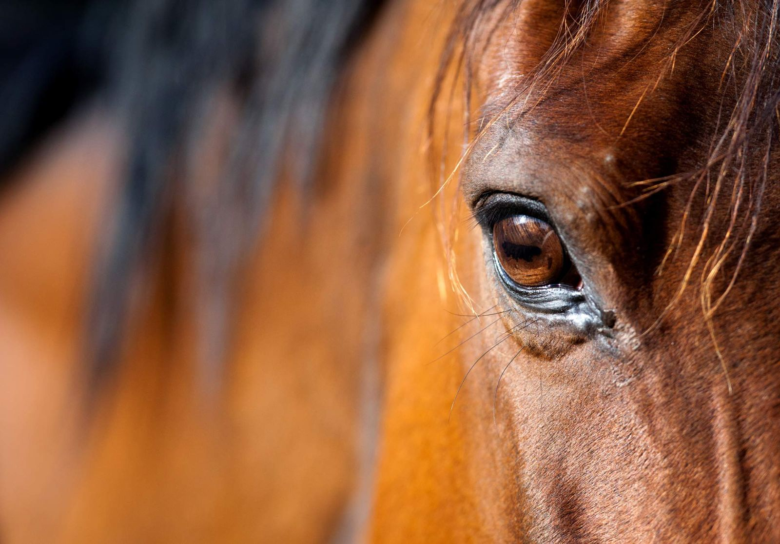Paard en Menz